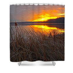 Shower Curtain featuring the photograph Rising Sunlights Up Shore Line Of Cattails by Randall Branham