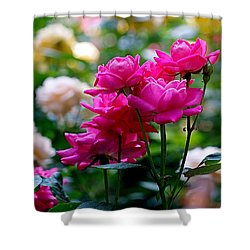 Rittenhouse Square Roses Shower Curtain by Rona Black