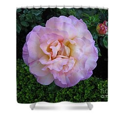 Ritzy Pink Rose Shower Curtain