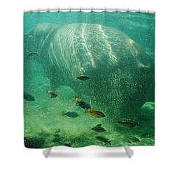 Shower Curtain featuring the photograph River Horse by David Nicholls