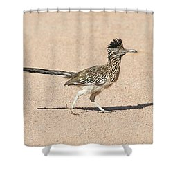 Road Runner On The Road Shower Curtain by Tom Janca