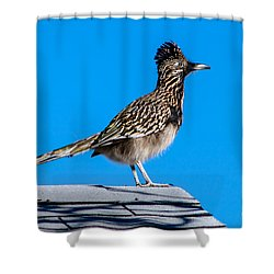 Roadrunner Shower Curtain by Robert Bales