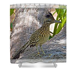 Roadrunner Shower Curtain