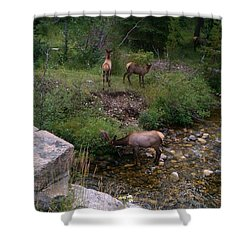 Roadside Luncheon Shower Curtain