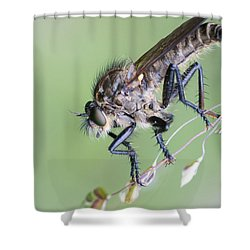 Robber Fly Asilinae Close Up Shower Curtain