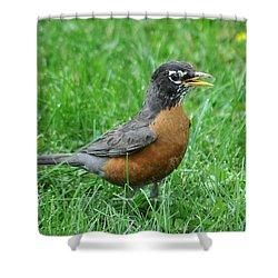 Robin 334 Shower Curtain