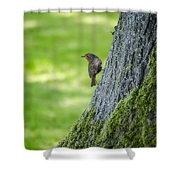 Robin At Rest Shower Curtain