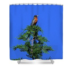 Robin Christmas Tree Topper Shower Curtain