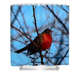 Shower Curtain featuring the photograph Robin by Gena Weiser
