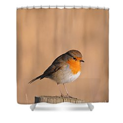 Robin Shower Curtain
