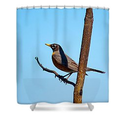 Robin Taking A Break Shower Curtain