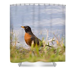 Robin Viewing Surroundings Shower Curtain