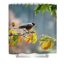 Shower Curtain featuring the photograph Robin With Red Berry by Nava Thompson