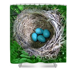 Robin's Eggs Shower Curtain by Ramona Johnston