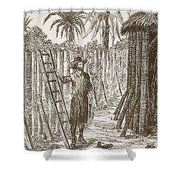Robinson Crusoe Building His Bower Shower Curtain by English School