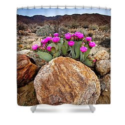 Rock And Beavertail Shower Curtain