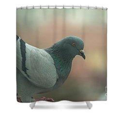 Rock Pigeon Shower Curtain
