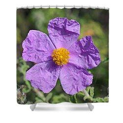 Rockrose Flower Shower Curtain by George Atsametakis