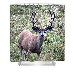 Rocky Mountain Buck Shower Curtain
