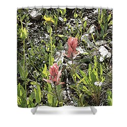 Shower Curtain featuring the photograph Rocky Mountain Flora by Ann Johndro-Collins