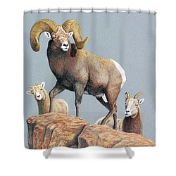 Rocky Mountain Ram Ewe And Lamb Shower Curtain