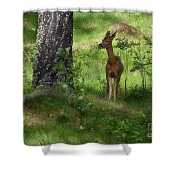Shower Curtain featuring the photograph Roe Buck Browsing Rowan by Phil Banks
