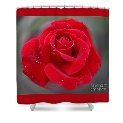 Shower Curtain featuring the photograph Rolands Rose by PJ Boylan