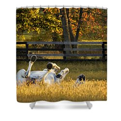 Roll In The Hay Shower Curtain
