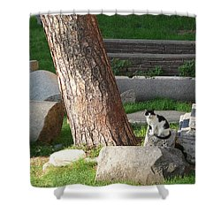 Shower Curtain featuring the photograph Roman Beauty by Evelyn Tambour