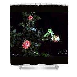 Romance Of The Roses Shower Curtain by Becky Lupe