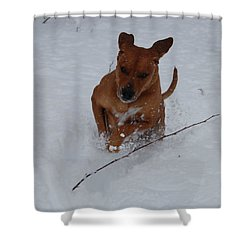 Shower Curtain featuring the photograph Romp In The Snow by Mim White
