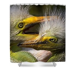 Rookery 7 Shower Curtain