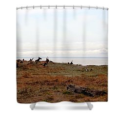 Roosevelt Elk And The Ocean Shower Curtain