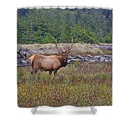 Roosevelt Elk Shower Curtain by Mark Alder