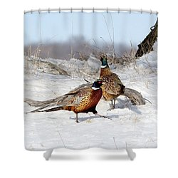Roosters Shower Curtain by Lori Tordsen