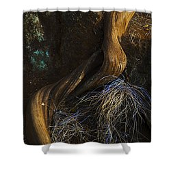 Shower Curtain featuring the photograph Tree Root by Yulia Kazansky