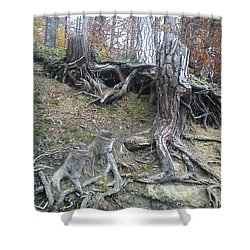 Shower Curtain featuring the painting Roots by Felicia Tica