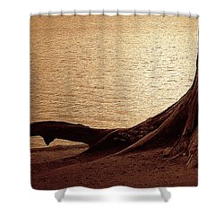 Roots Shower Curtain by Mim White