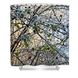 Shower Curtain featuring the painting Rosa Canina  by Felicia Tica