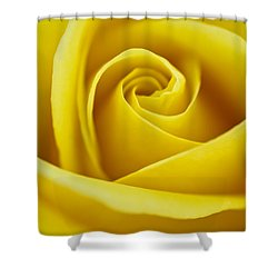 Rosa 'freedom' Shower Curtain by Lana Enderle