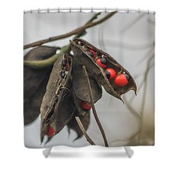 Rosary Pea Shower Curtain