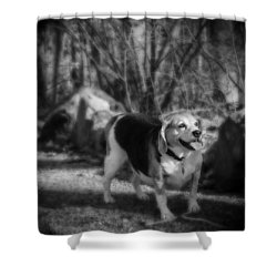 Roscoe Shower Curtain