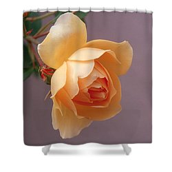 Rose 4 Shower Curtain