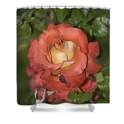 Rose 6 Shower Curtain