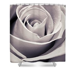 Rose Shower Curtain by Adam Romanowicz