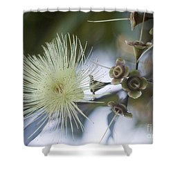 Rose Apple Blossom Shower Curtain