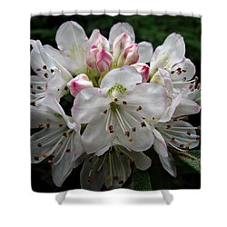 Rose Bay Rhododendron Shower Curtain
