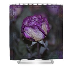 Shower Curtain featuring the photograph Rose Beauty After by Sandra Foster