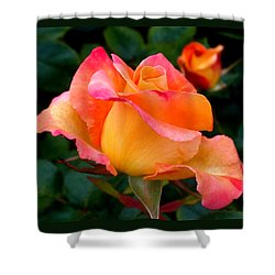 Rose Beauty Shower Curtain by Rona Black