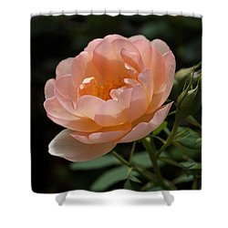Rose Blush Shower Curtain